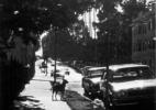 Stray Dog #1, (Los Angeles), 1990/92 19″x19″ B&W Photograph