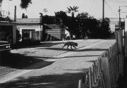John Divola, Four Landscapes Portfolio, Stray Dog