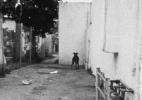 Stray Dog #3, ( Los Angeles), 1990/92 19″x19″ B&W Photograph