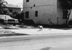 Stray Dog #4, ( Los Angeles), 1992 19″x19″ B&W Photograph