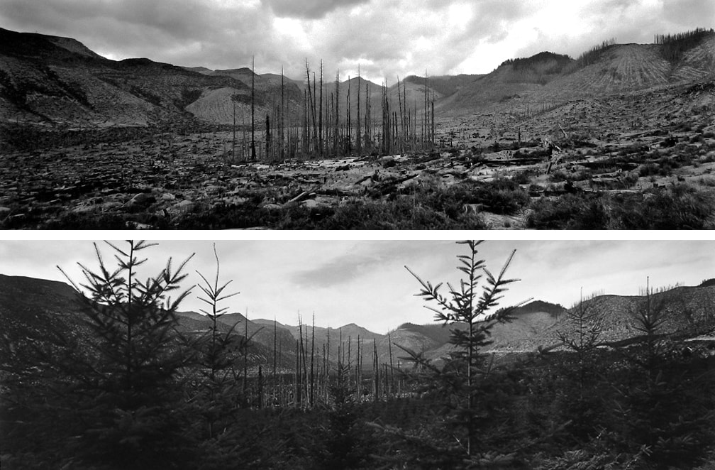 Valley of Clearwater Creek, Salvage and Replanting Completed, Dead Trees Left Standing to Provide Wildlife Habitat, 10 Miles NE of Mount St. Helens, Washington 1, 1983