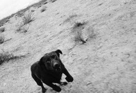 John Divola, Dogs Chasing My Car in the Desert