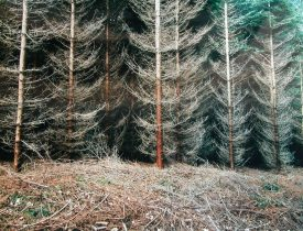 Simone Nieweg, Photographs