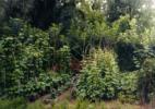 Garten-am-Wald-Thionville-2009