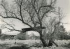 4_Tree House #5