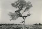 5_Tree House #7