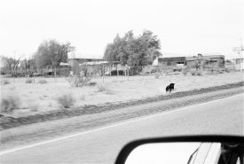 John Divola, Dogs Chasing My Car in the Desert