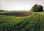 Kartoffelacker im Oderbruch, Neuhardenberg, 2002