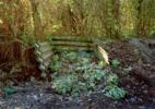 Komposthaufen mit Raureif, Noyon, Oise 2005_83