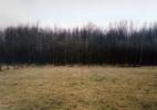 Waldrand in der Dammerung