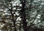 4_Irons_TreesInRain