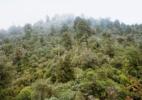 2466 Huahungaroa