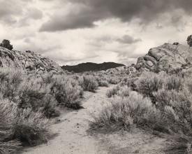 Harsh shrubs under dramatic sky, Mark Ruwedel, Pictures of Hell