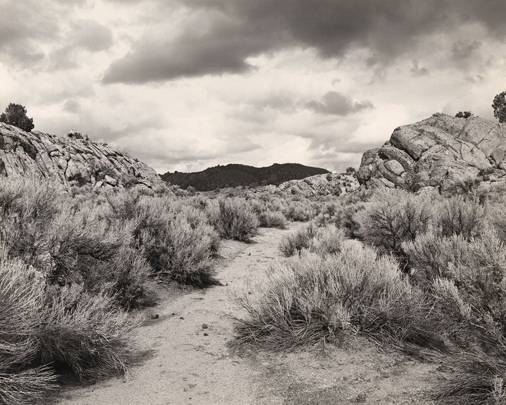 Harsh shrubs under dramatic sky, Mark Ruwedel, Pictures of Hell