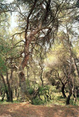 Simone Nieweg, Forests
