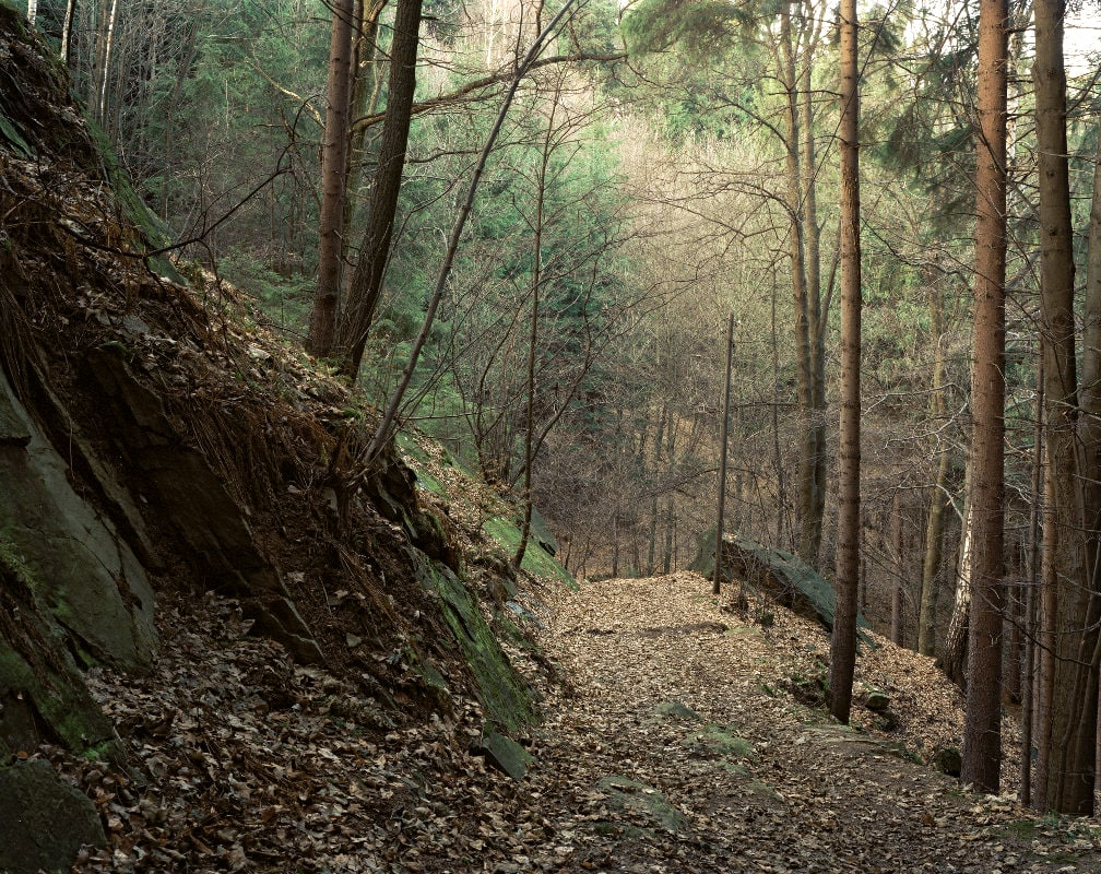 66. Forest Path in the Lusatia, 1998.jpg