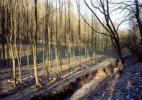 78. Forest in Essen II, Ruhr Region 2000