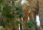 Oasis Palms