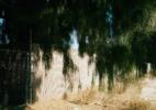 Fence w/ Deep Shade