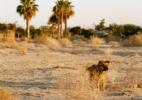 Dog at Sunset #2