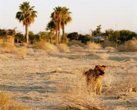 Ron Jude, Dog at Sunset #2