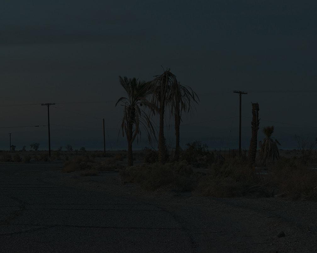 Ron Jude, Dark Palms