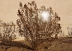 Bush w/ Sun Reflection
