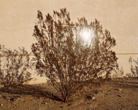 Ron Jude, Bush w/ Sun Reflection