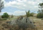Landscape for Antonioni, 9_8_2010, 4:56PM – 5:17PM, 33.94522,-117.138789