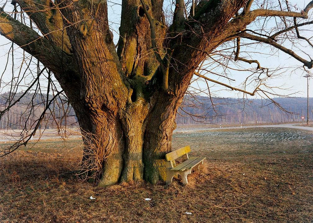 6. Old Linden Tree Geisenhausen Hallertau 1991