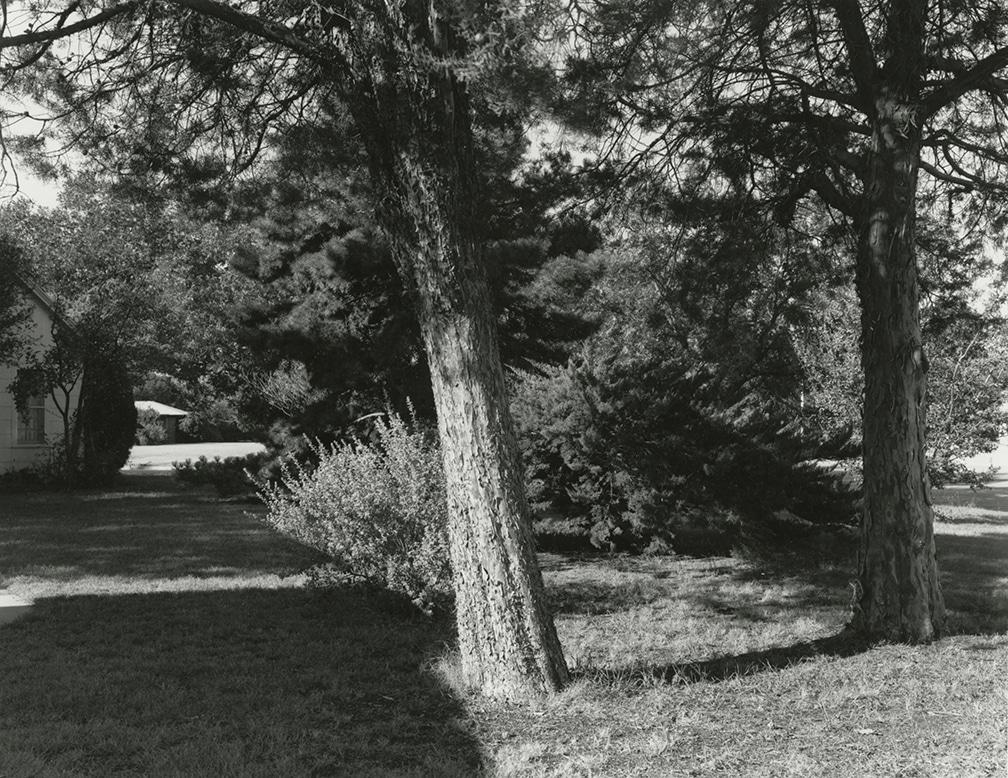 Cedar Trees in the Side Yard – 2201 Wenonah, Wichita Falls, Texas, 1978/2016