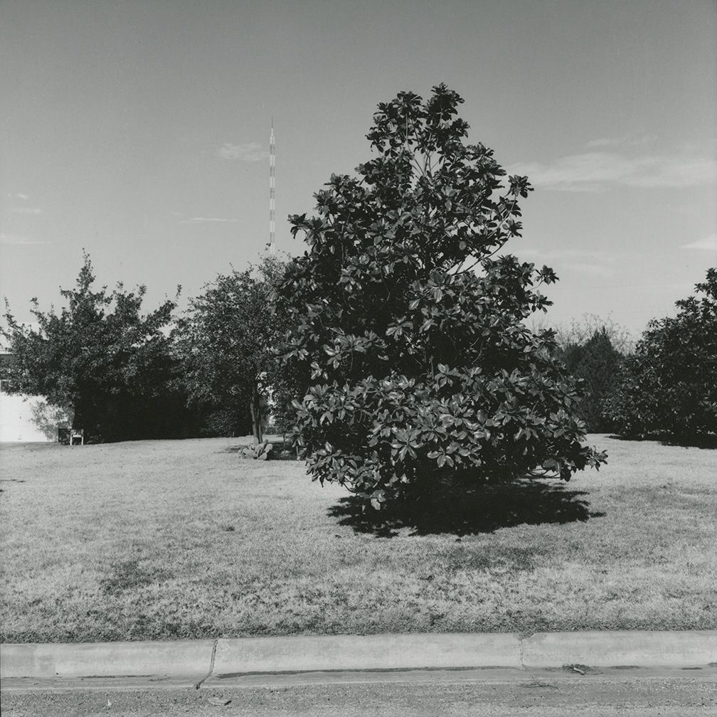 Magnolia Tree, Kessler Blvd. looking north – Wichita Falls, Texas, 1972/1973