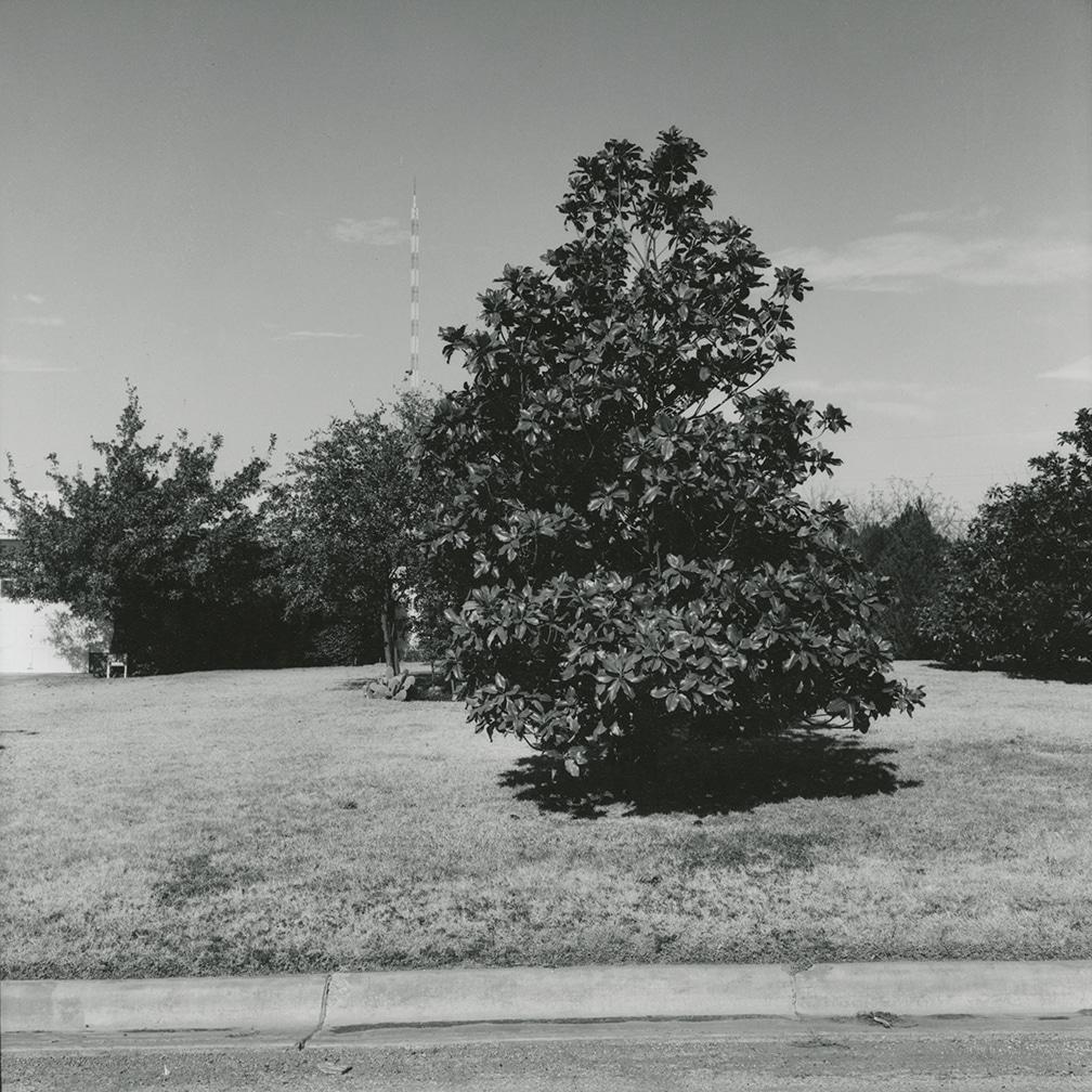 Magnolia Tree, Kessler Blvd. looking north – Wichita Falls, Texas, 1972/1973