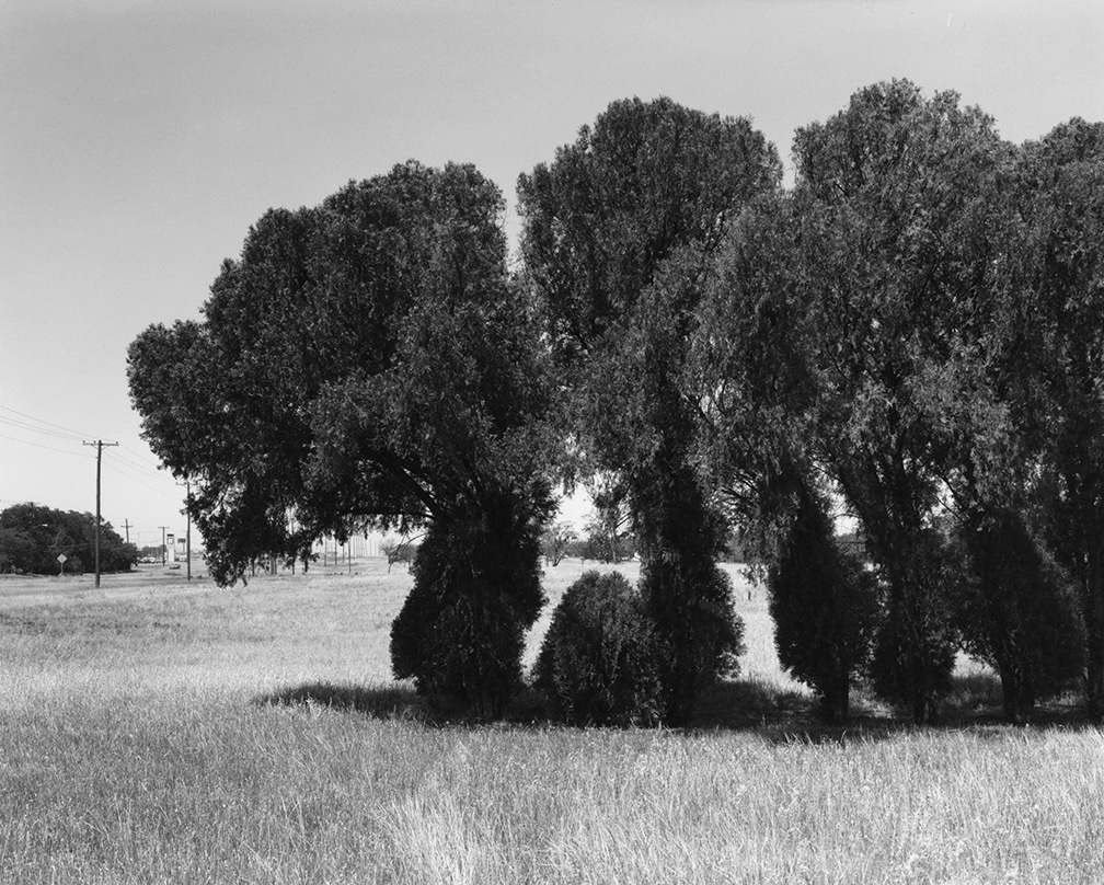 Texas Memories #3: Cedar Trees (marking former house site) on Kell Boulevard, Wichita Falls, 1984/1988