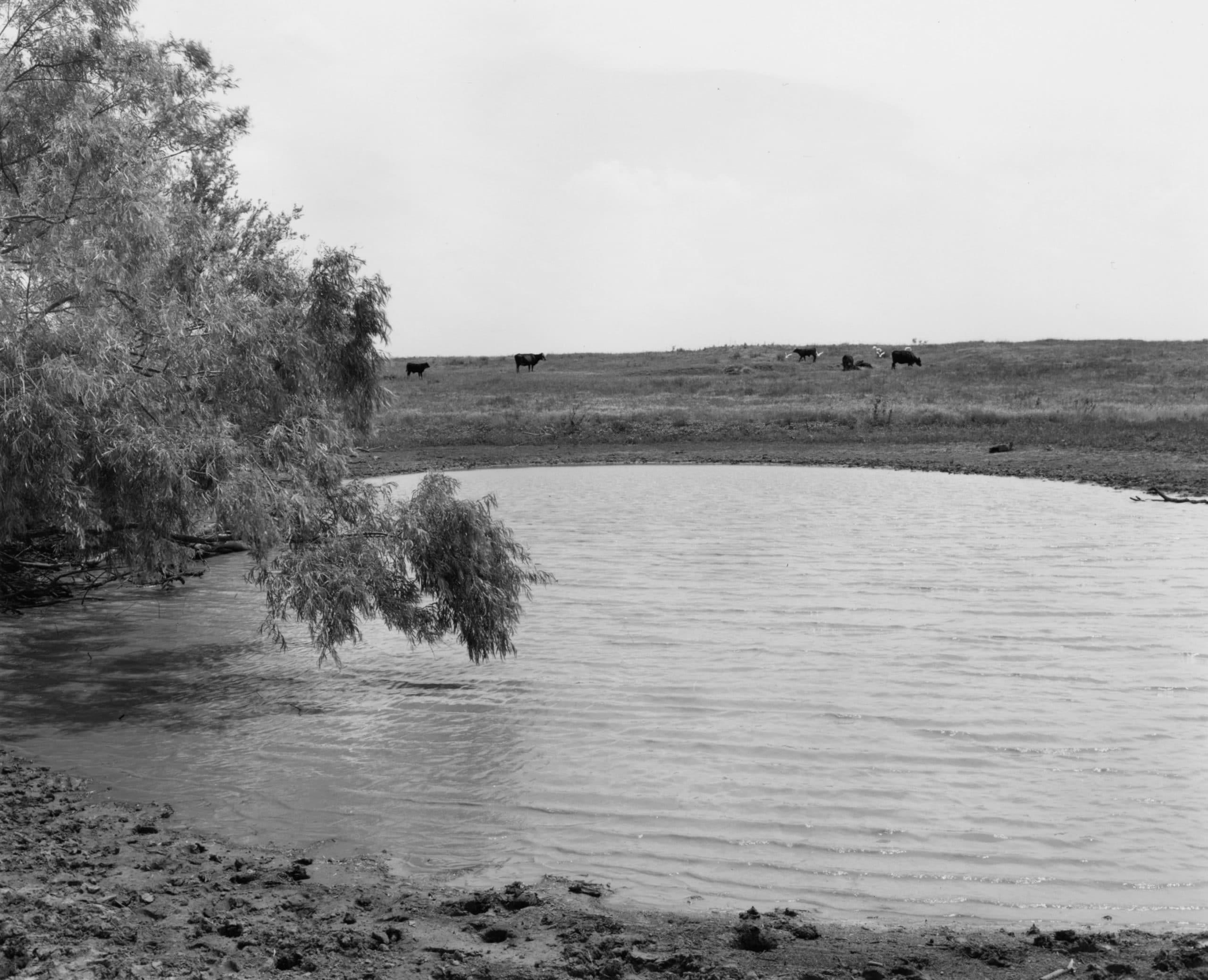 Texas Memories #9: Willow Trees Beside Stock Tauk, near Lake Arrowhead, outside of Wichita Falls, Texas, 1984/1988