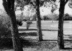 Three Cedar Trees in the side yard – 2201 Wenonah, Wichita Falls, Texas, 1972/1974
