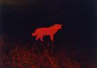 C Wolf, 1983