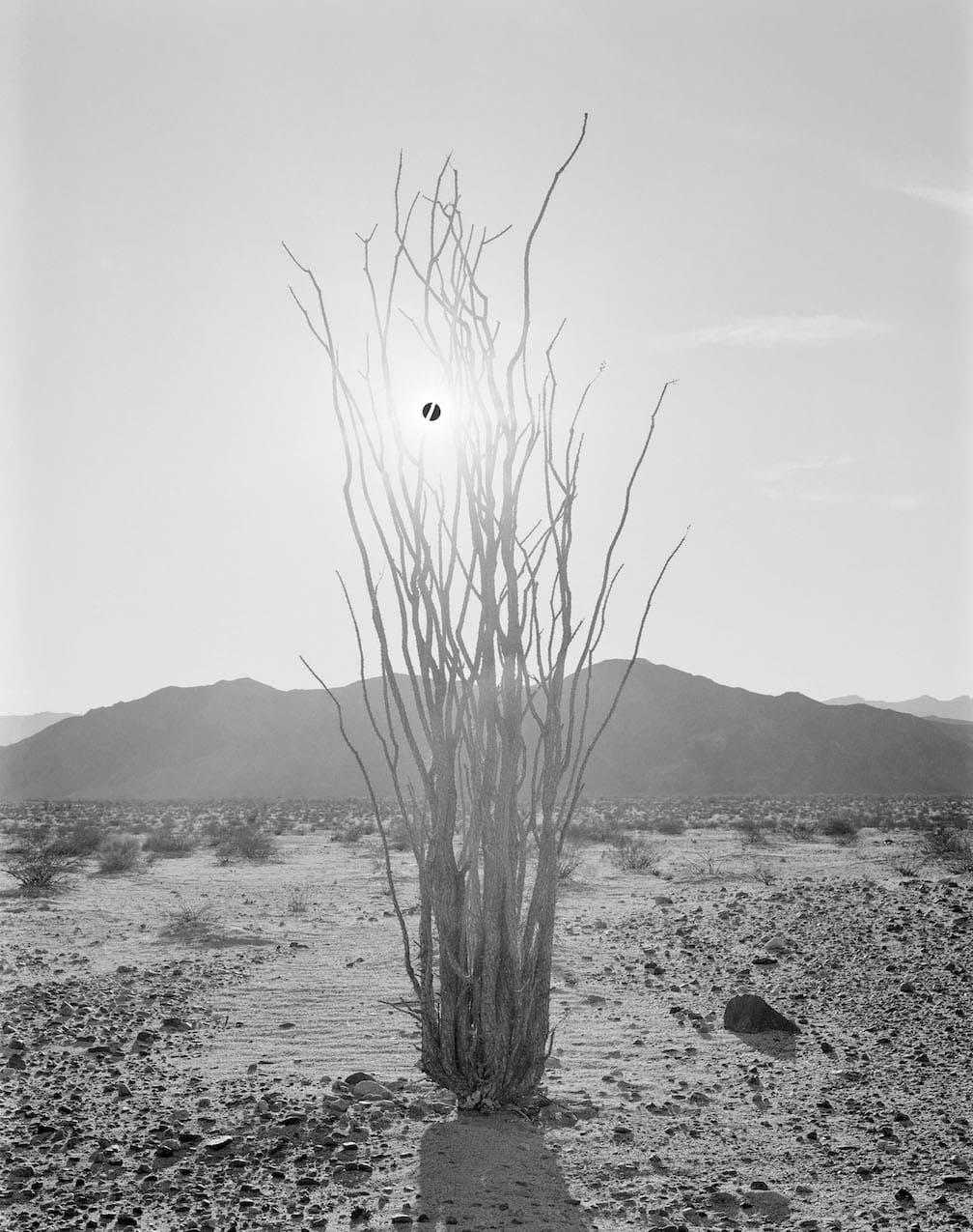 Black Sun and Ocotillo_6m
