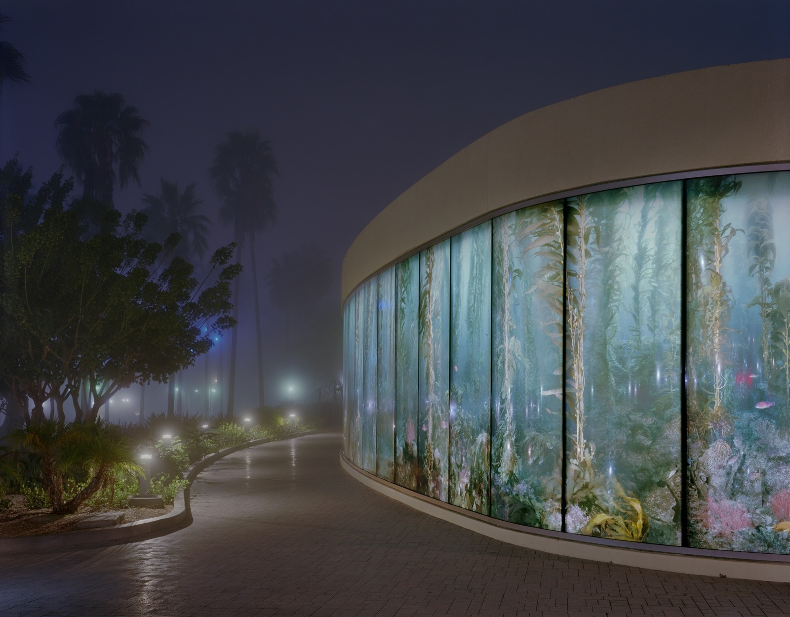 Aquarium in the Fog