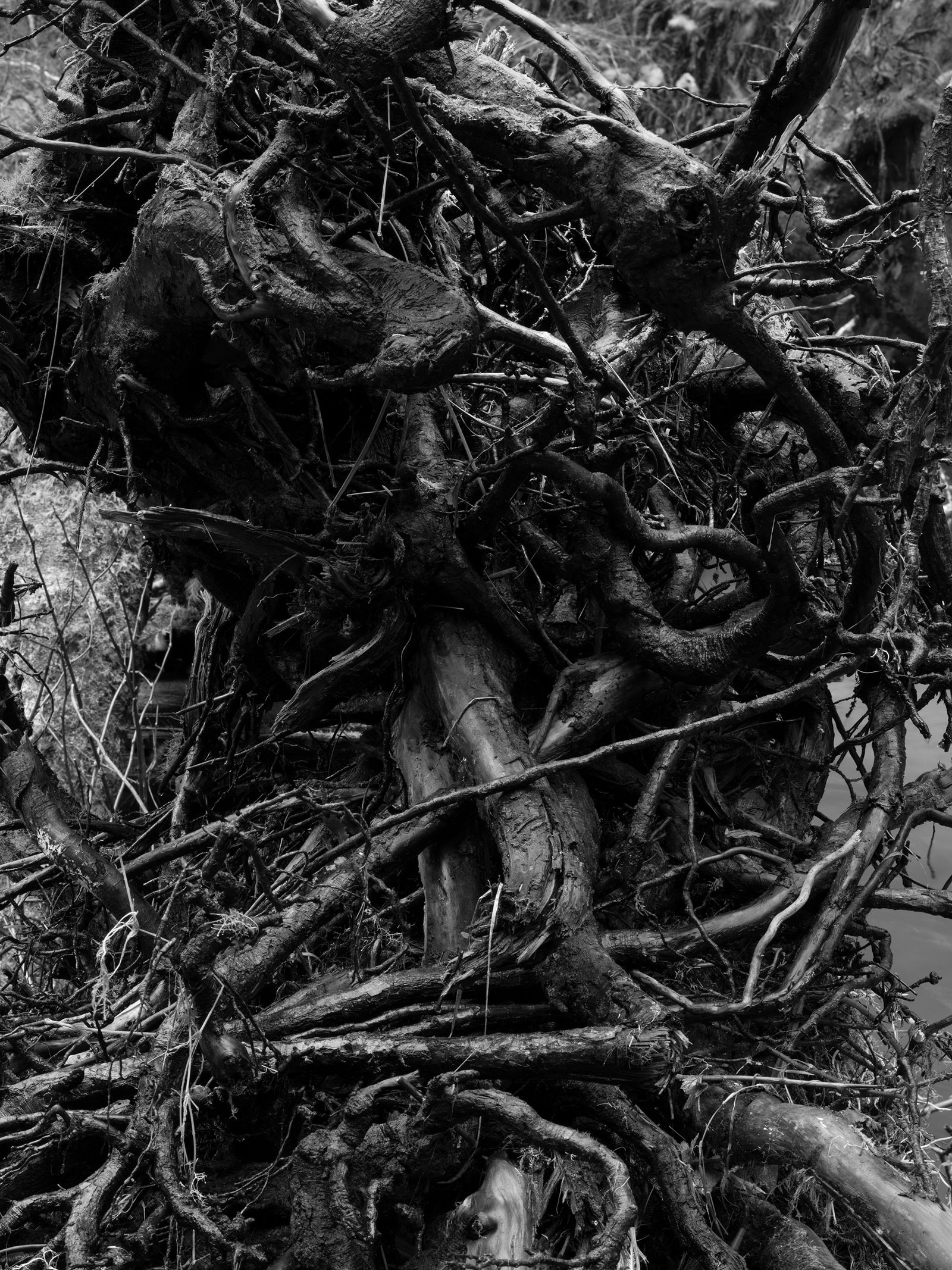 forest_floor_119_42x31.5