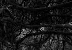 forest_floor_127_42x31.5