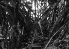 forest_floor_148_42x31.5