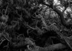 forest_floor_162_42x31.5