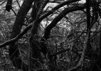 forest_floor_164_42x31.5